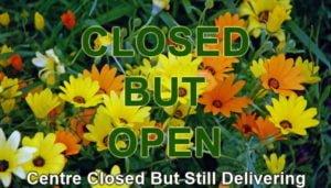 The Nursery Garden Centre Blog Closed but Open