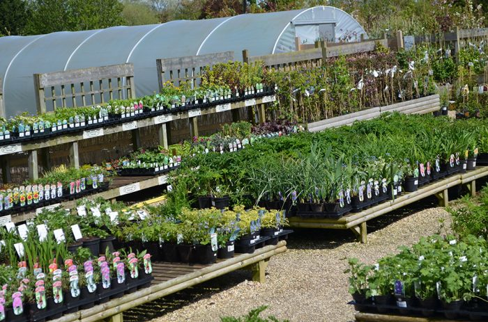 The Nursery Garden Centre Overview Image