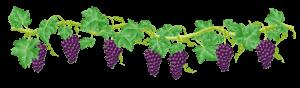 The Nursery Garden Centre Blog Grapevine Header