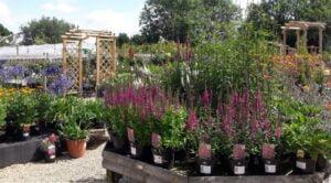 The Nursery Garden Centre Background